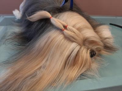 Koiran rodunomainen trimmaus